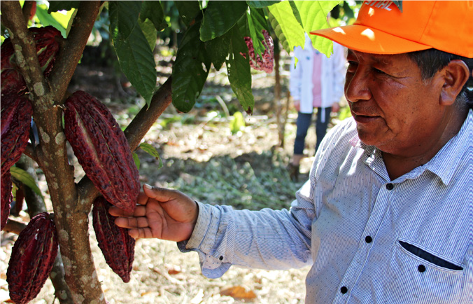Investing in agroforestry in Peru's Amazon: Good for the economy and the environment